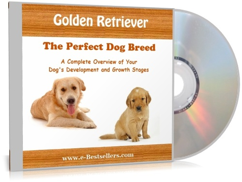 Product picture Golden Retriever: The Perfect Dog Breed